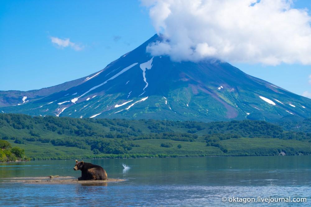 бурый медведь на Курильском озере