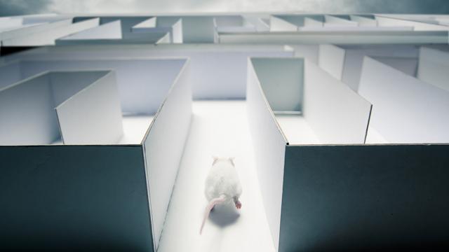 control the dreams of rats