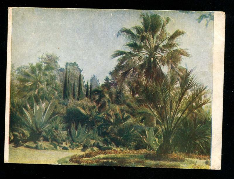 Сочи Ботанический сад Пальмы и кактусы. Савельев