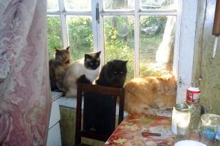 Все коты вместе