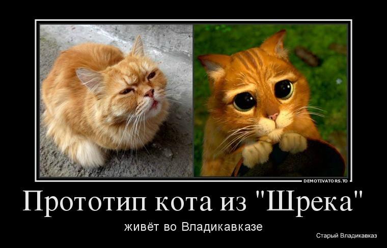 38440_prototip-kota-iz-shreka_demotivators_to
