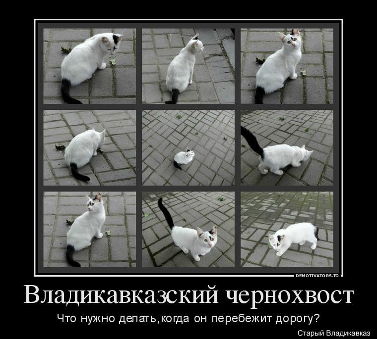 340333_vladikavkazskij-chernohvost_demotivators_to1