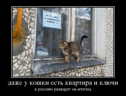 1386530997_1386227857_svezhie-demki-6