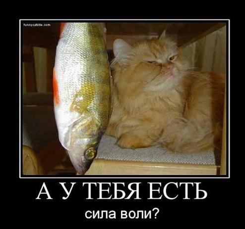 1378834896_0_2e656_3c93295_l