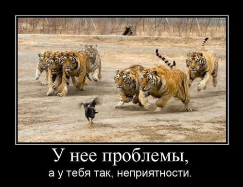 1408308190_1407429954_demotivatory_24