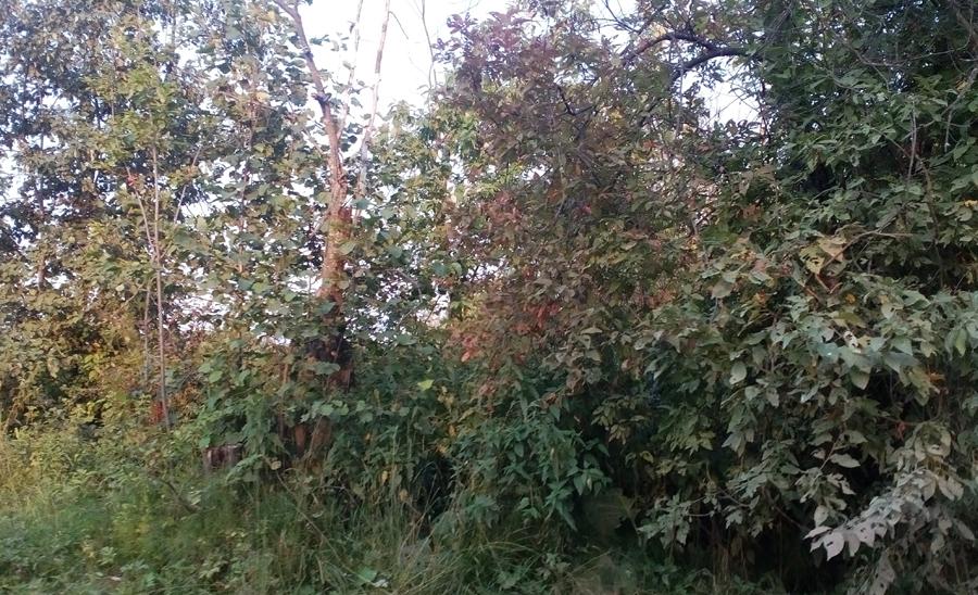 Северный лес 01-IMG_20160816_190815