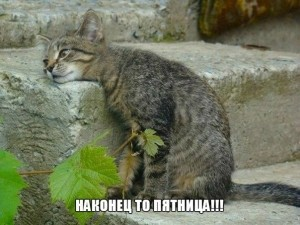 201403210041-nakonets-to-pyatnitsa-kashamalasha-com