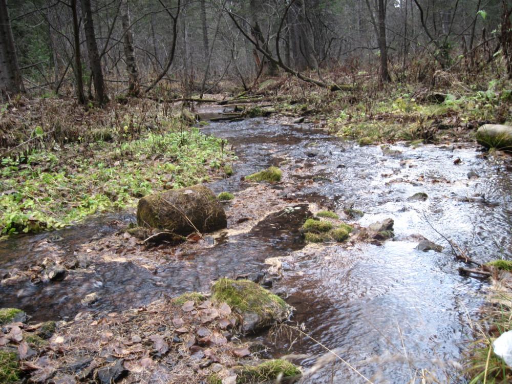 01-Речка в лесной глуши
