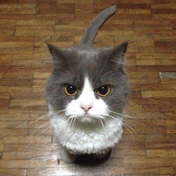 первая кот