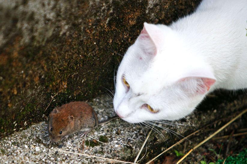 последняя кот и мышь