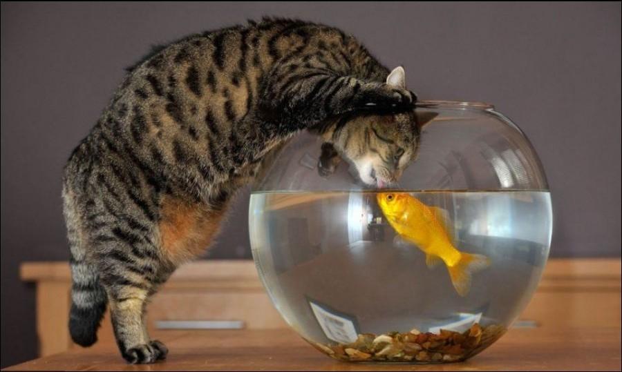 последняя самая кот и рыба