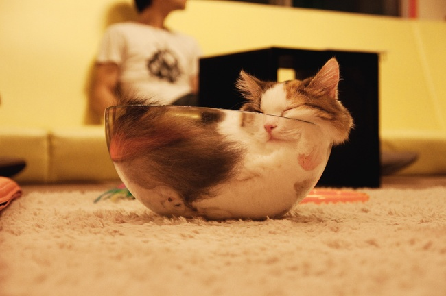spyascie-koty-8