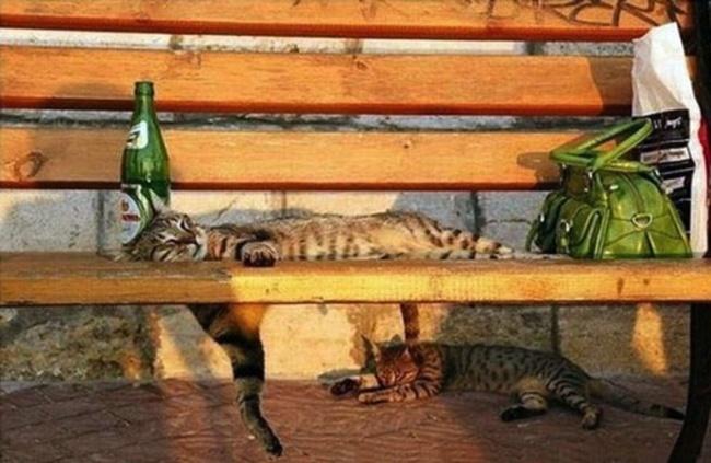 spyascie-koty-25