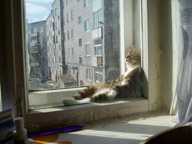 spyascie-koty-26