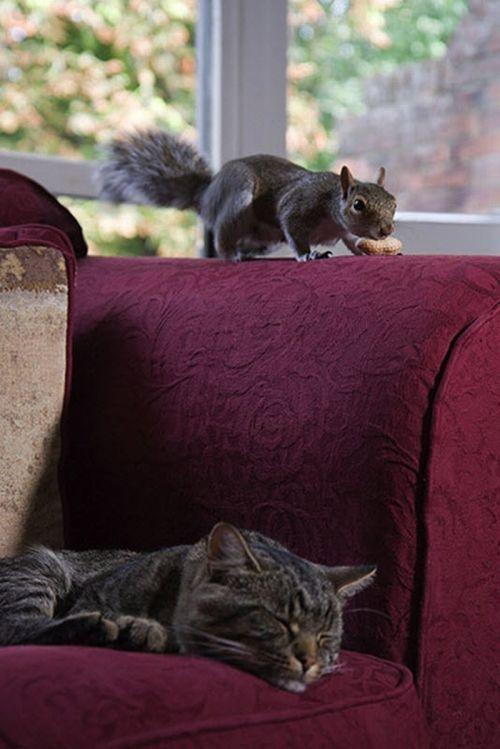 21aaf_Squirrel_01