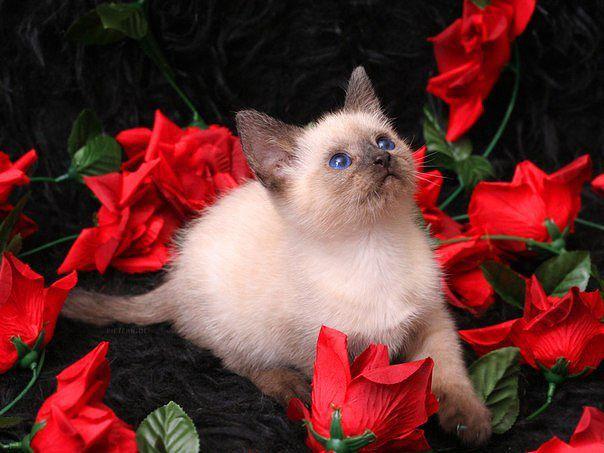 Открытки цветы для тебя с животными 654