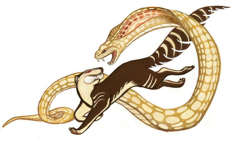 rikki_tikki_tavi__snake_fight_by_monicamcclain-d3fztwx