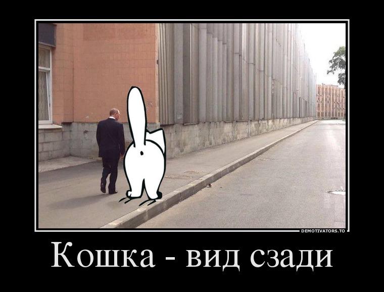 543261_koshka-vid-szadi_demotivators_ru