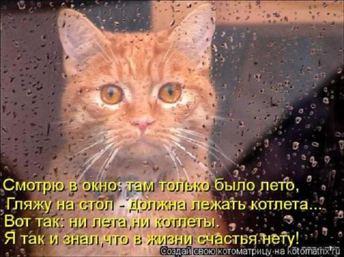 Смотрю в окно...