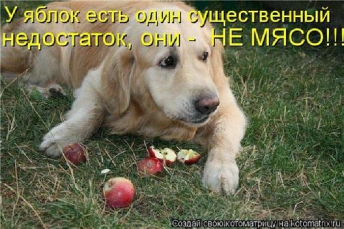 У яблок есть один существенный недостаток...