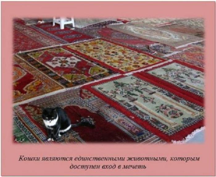 Кошки в мечети