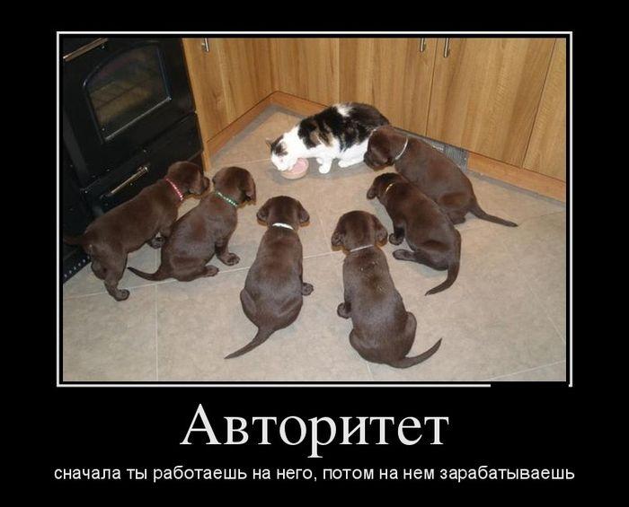 Авторитет