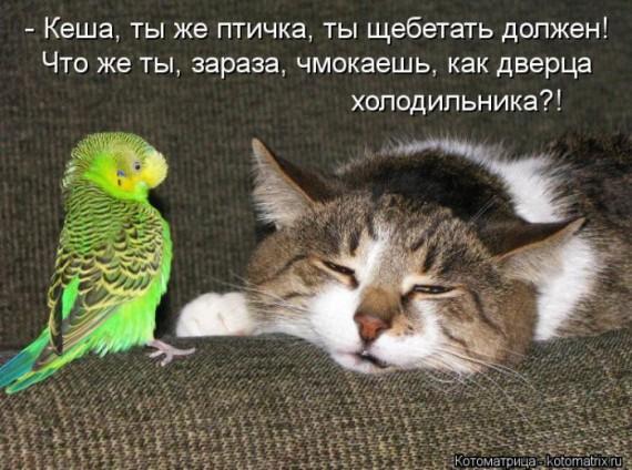 Кеша, ты же птичка,..