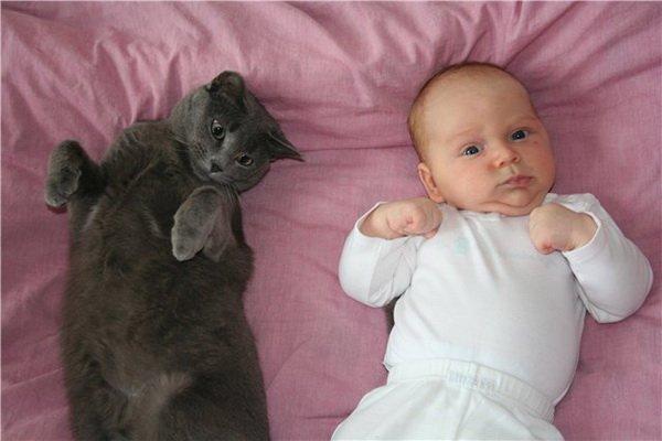 1  6 милых кошачьих повадок и их объяснения