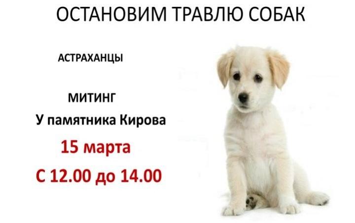Митинг собаки