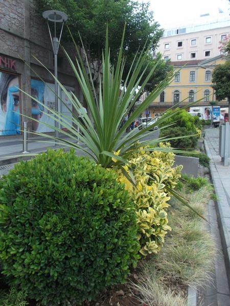 06 Растения