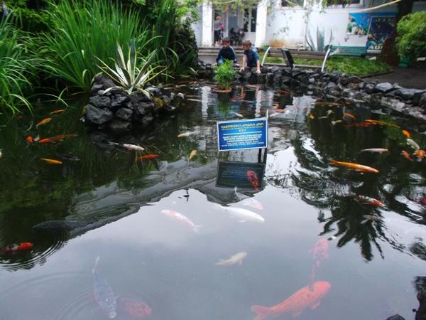 26 рыбки