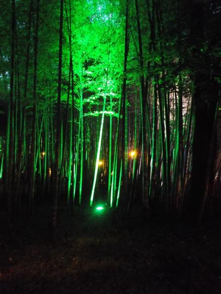 40 бамбук