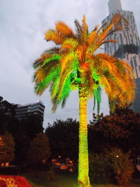 42 пальма