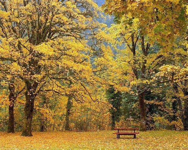 Осень. Тихо. Измененная реальность...