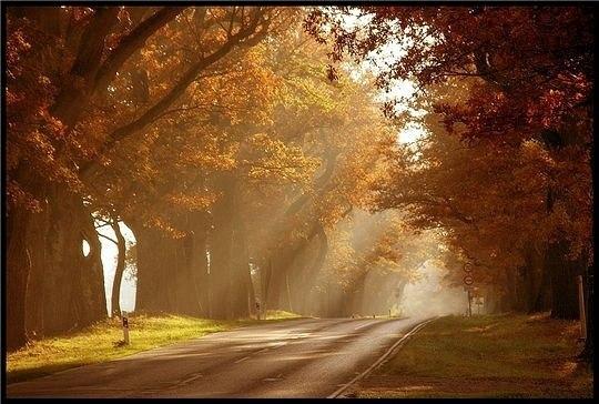 Осень. Дорога