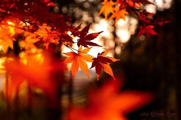 Осень. В багрец и золото...