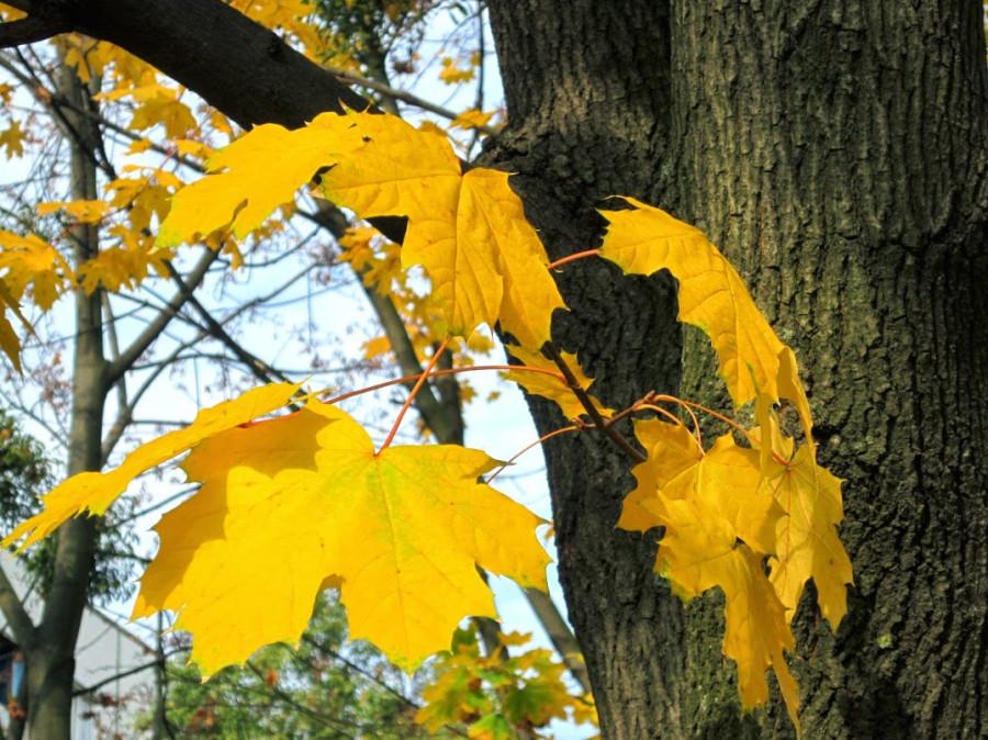 Осень2