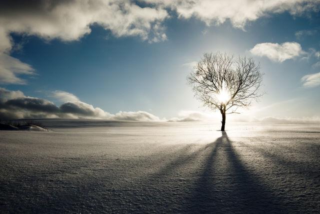 Солнце. Дерево. Небо. Песок (зима)