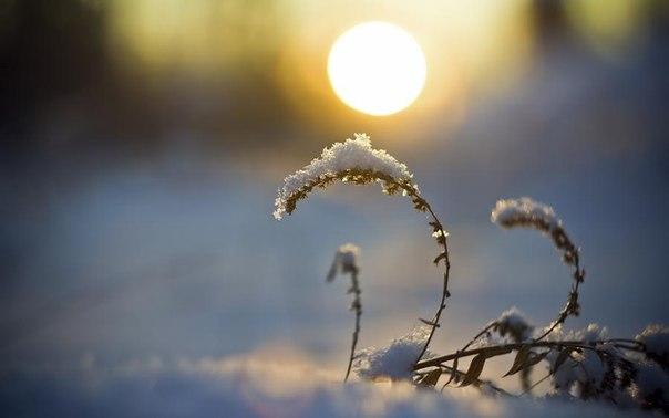 Снег. Солнце. Трава...