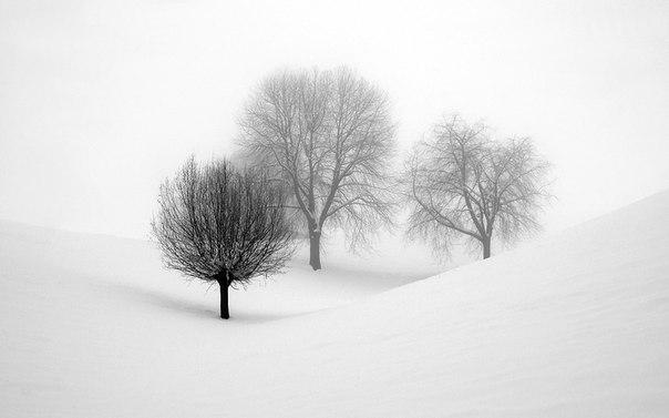 Белое безмолвие