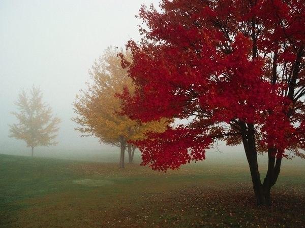 Осень. Грусть. Туман