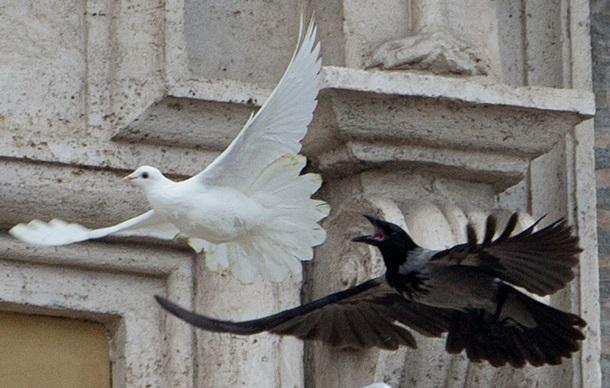 Ворон и голубь