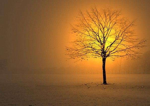 Дерево. Капли. Свет