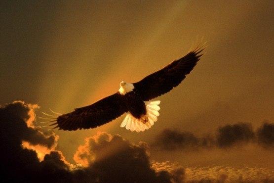 Полет орла...