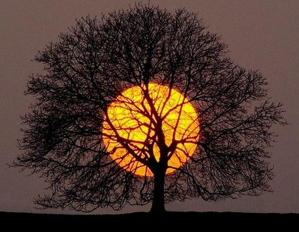 Дерево. Небо. Солнце