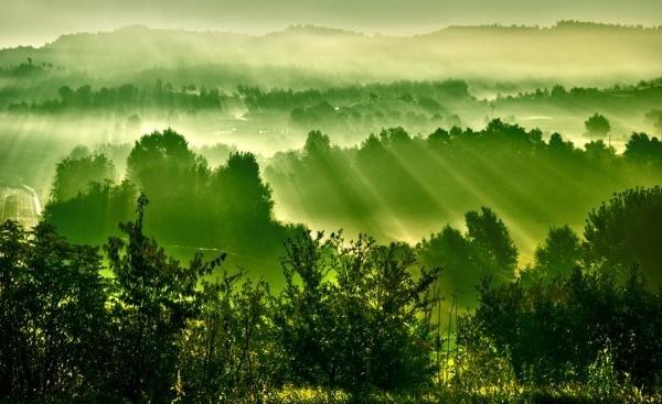 Зеленая...