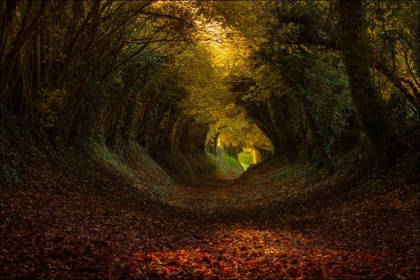 Лесной тоннель