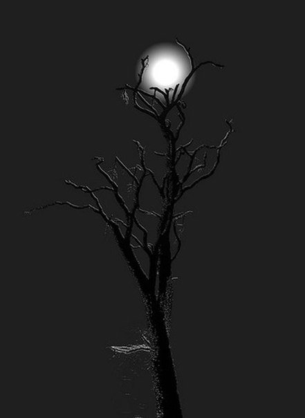 Дерево. Луна. Ночь...