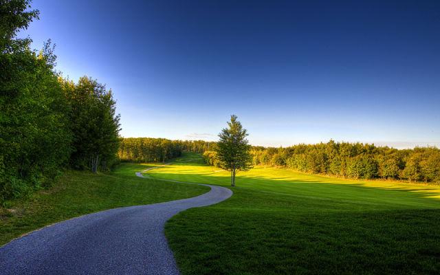 Дорога, зелень, лес