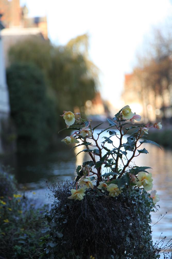12NOV_Brugge-3141